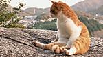 Onomichi_cat