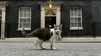 Larry_the_cat_uk_2