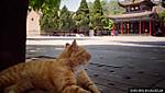 Museum_cat