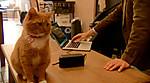 Musicforcats_ks_1